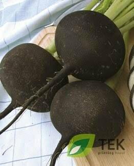 Rzodkiew czarna - rzepa