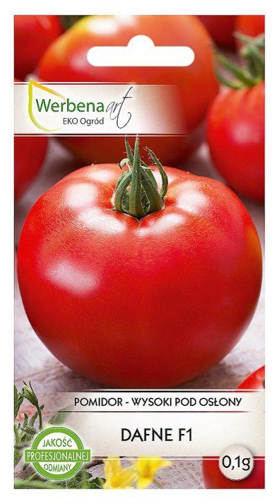 pomidor dafne przod