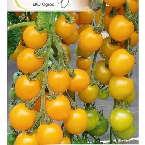 pomidor goldkrone przod
