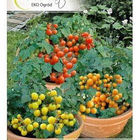 pomidor mieszanka odmian przod