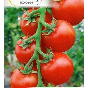 pomidor spencer przod