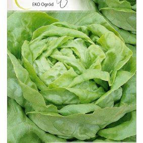 salata adinal przod