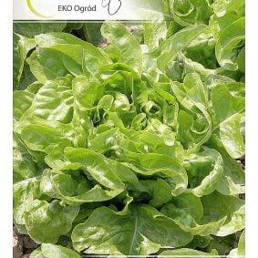 salata dubacek przod