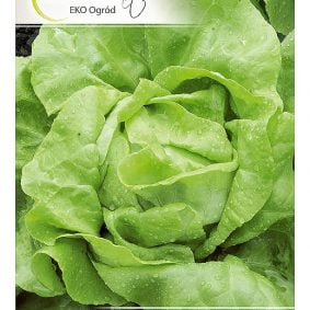 salata krolowa majowych przod