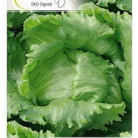 salata larsen przod