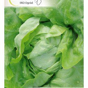 salata lento przod