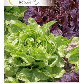 salata lisciowa mieszanka odmian przod