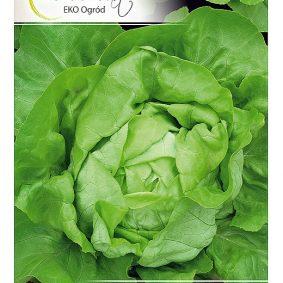 salata michalina przod