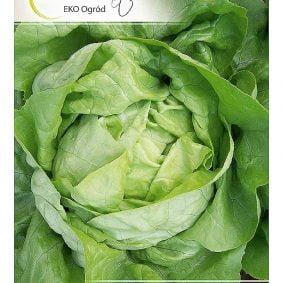 salata panter przod
