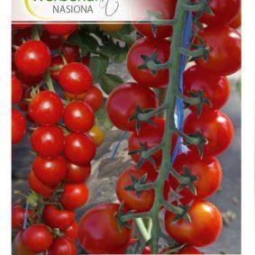 pomidor charmant front