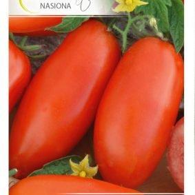 pomidor zyska front