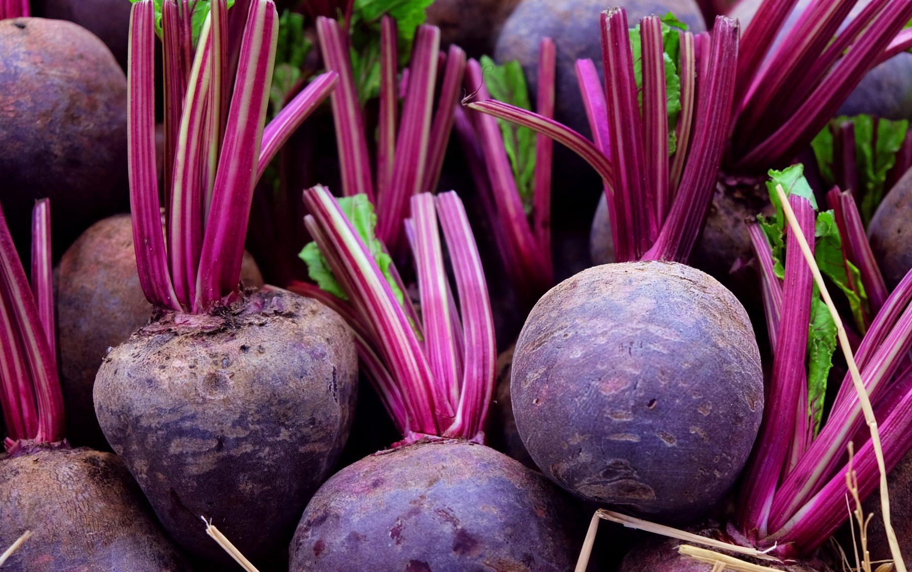 beets by darasp kran ss crop