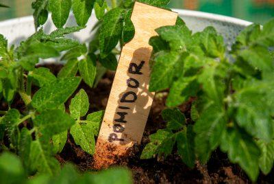 Znacznik do nasion i roślin typ I