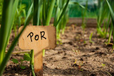 Znacznik do nasion i roślin typ T